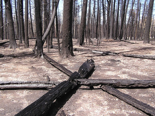 Forest fires and their impact on flash floods