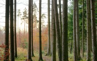 Norway spruce forests in Finland under climate change