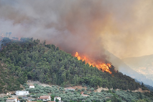 Managing forests and fire in changing climates