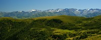 Alpine and subalpine vegetation habitat reduction in the Pyrenees