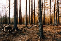 Forest fire danger changes in Finland due to climate change