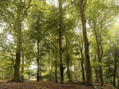 Widespread forest mortality under climate warming