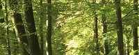 Forest management cannot keep pace with climate change impact on European forest