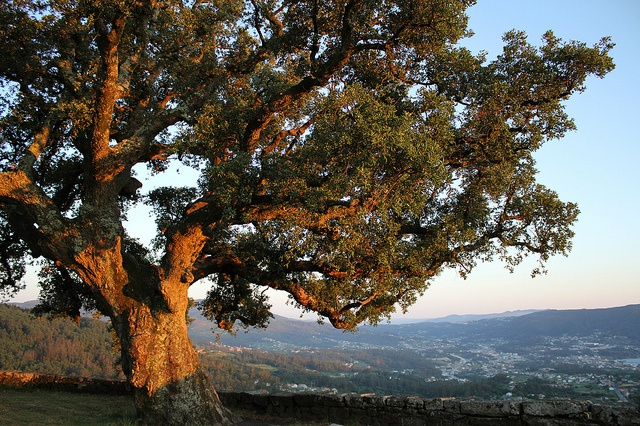 Managing cork oak production under climate change in Portugal
