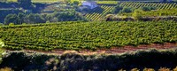 Too hot future for high-quality wine in central and southern Spain