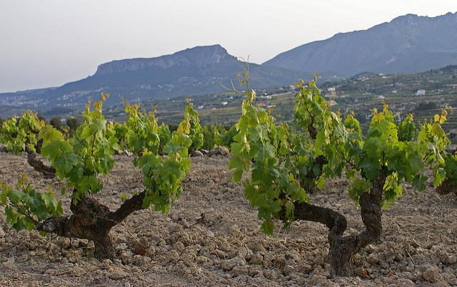 Spanish premium-quality wine areas at risk under climate change