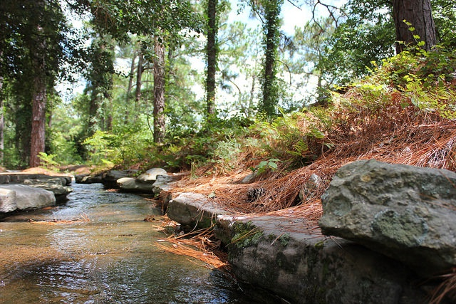 Forest management can mitigate climate change effects on streamflow