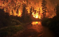 Wildfires and climate change, a connection that's hard to deny