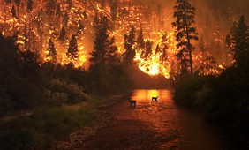 Longread - Wildfires and climate change, a connection that's hard to deny