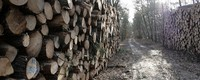 More woods in the Netherlands to tackle global warming