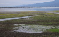 Wetlands are shrinking rapidly in Greece
