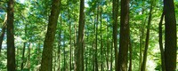 More than carbon storage - The role of forests in climate change
