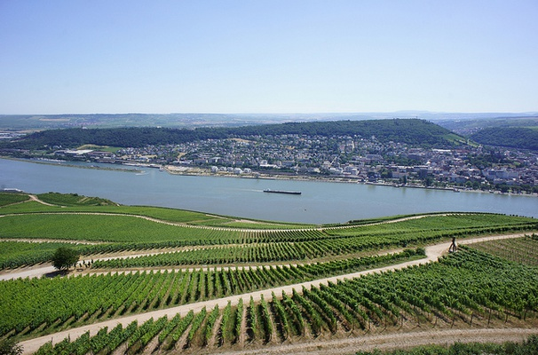 The River Rhine is heating up in response to climate change
