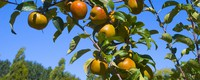 Shifting fruit growing conditions call for adaptation in southern Europe