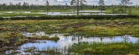Cultivated peat soils lead to land subsidence and emit greenhouse gases. How can we avoid this?