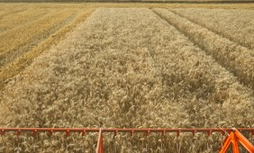 Technology may counterbalance negative impacts of climate change on cereal yields in Western Europe