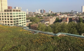 Do green roofs mitigate stormwater runoff in urban areas?