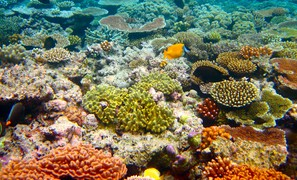 Marine heat waves threaten global biodiversity and the provision of ecosystem services