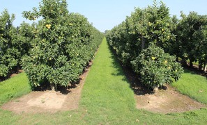 Increasing risks of apple tree frost damage under climate change